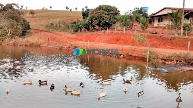 Fazenda à venda - 75 hectares - onça do pitangui (mg) - Foto 4