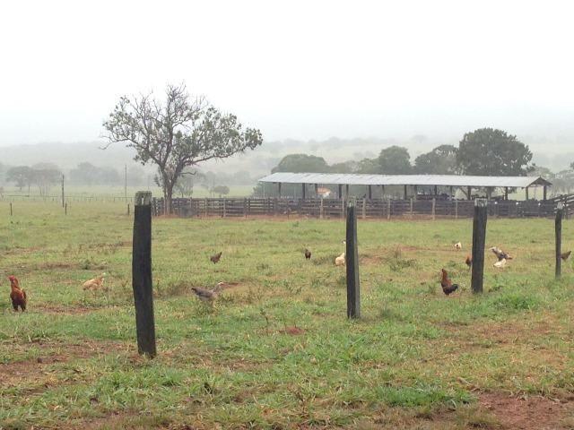 Fazenda - 1100 Hectares - Cáceres/MT - Foto 8