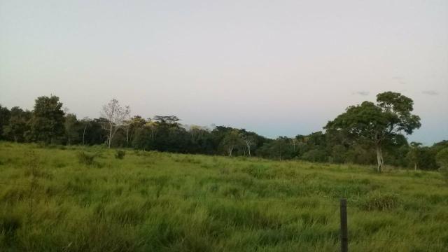 Fazenda 80 hectares próximo a Cuiabá - Foto 7