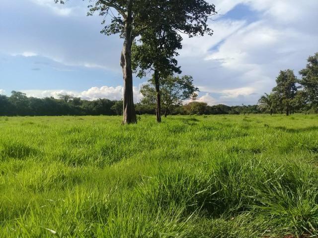 Fazenda 80 hectares próximo a Cuiabá - Foto 8
