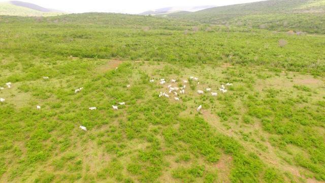 Fazenda Jaguaquara - Foto 13