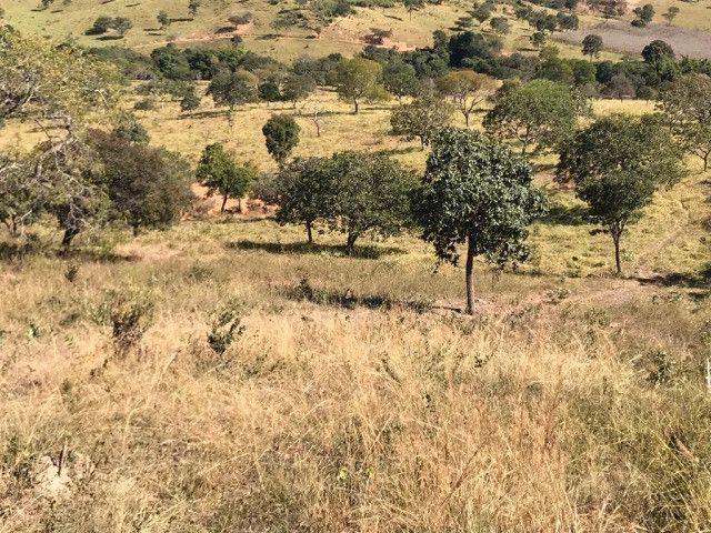 Fazenda 65 Ha em Onça de Pitangui - MG - Foto 18