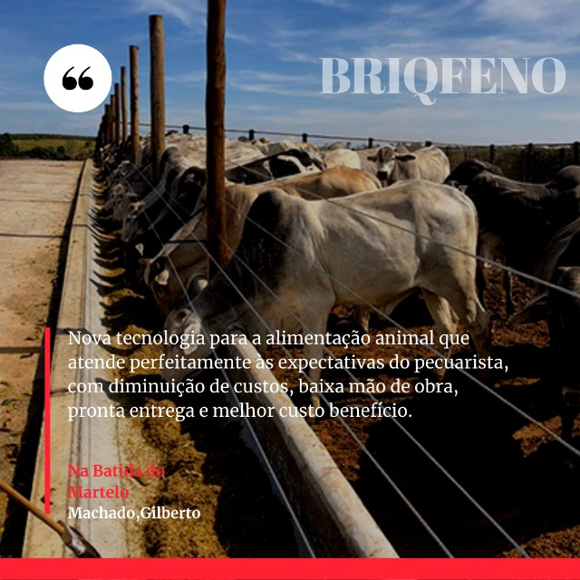 Briqfeno - Foto 2