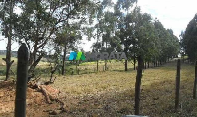 Fazenda pecuária - 220 hectares - belo vale (mg) - Foto 5