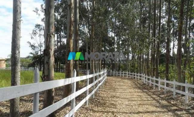 Fazenda pecuária - 220 hectares - belo vale (mg) - Foto 6