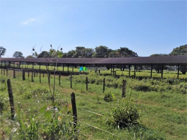 FAZENDA A VENDA - 300 hectares - REGIÃO PITANGUI (MG) - Foto 16
