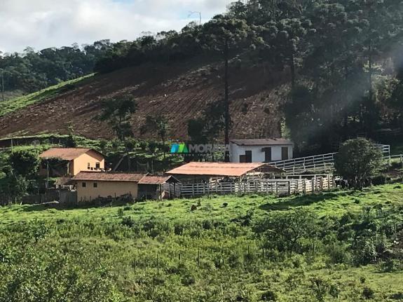 Fazenda à venda - 40 hectares - região santana dos montes (mg) - Foto 11