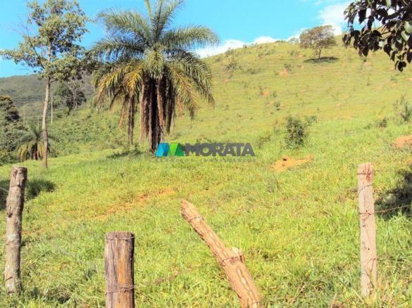FAZENDA - 334 hectares - PARÁ DE MINAS (MG) - Foto 15