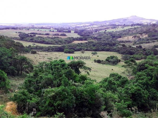 Fazenda à venda - 90 hectares - lavras (mg) - Foto 6