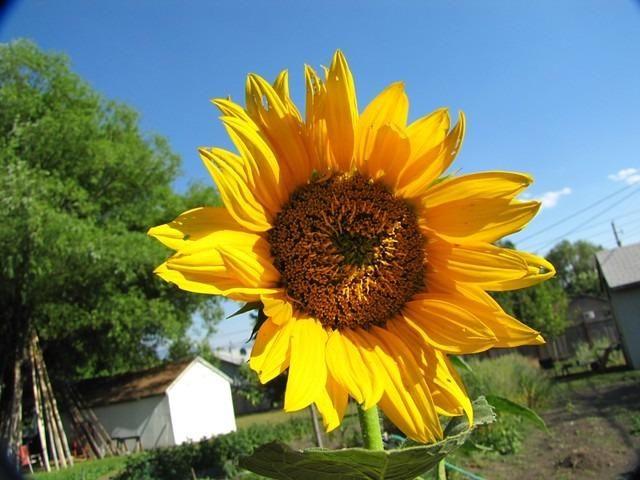 Jardinagem Orgânica / Curso Jardinagem Orgânica - Foto 3
