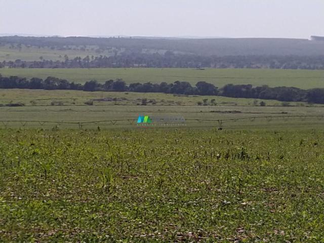 FAZENDA A VENDA - 300 hectares - REGIÃO PITANGUI (MG)