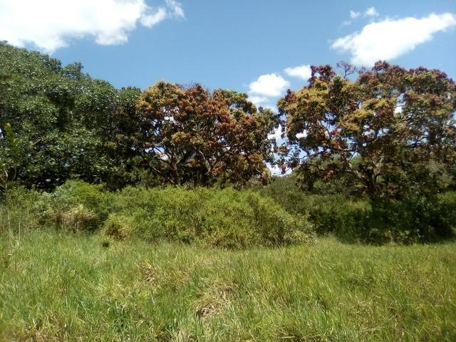 Vendo ou troco terreno / sítio em Alagoinhas Bahia - Foto 5