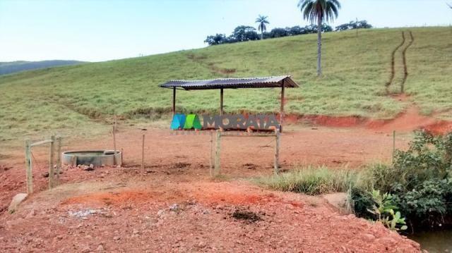 Fazenda à venda - 75 hectares - onça do pitangui (mg) - Foto 6