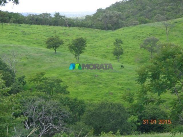 Fazenda haras – 990 hectares - sete lagoas (mg) - Foto 8