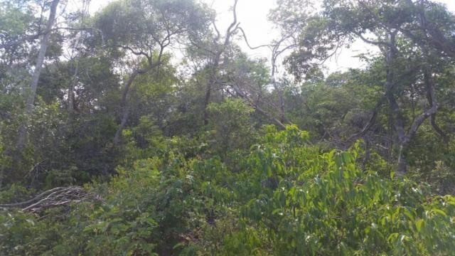 Fazenda à venda, 150000000 m² por R$ 55.809.000,00 - Zona Rural - Pilão Arcado/BA - Foto 9