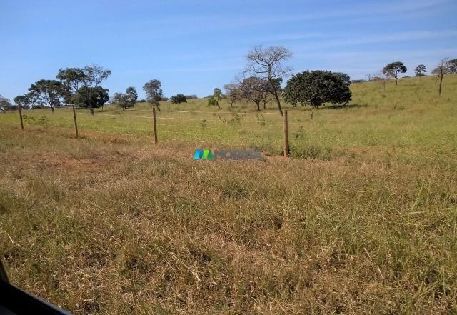 FAZENDA À VENDA - 300 HECTARES - PITANGUI (MG) - Foto 12