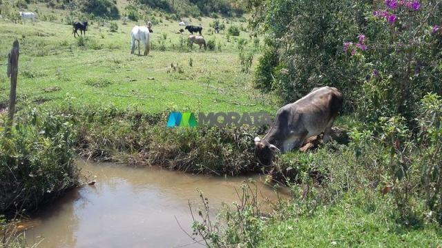Fazenda - 80,70 hectares - congonhas do norte (mg) - Foto 12