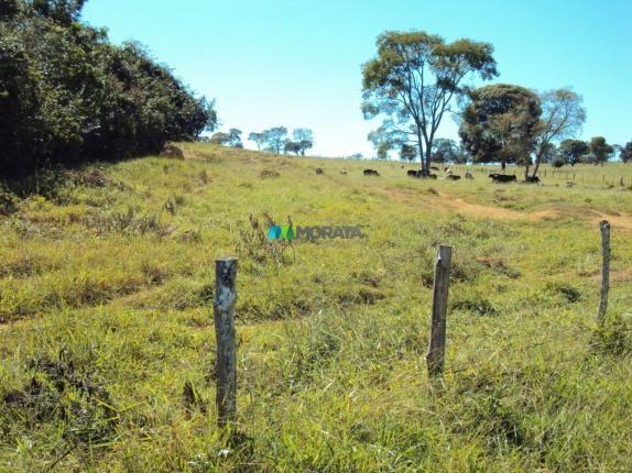 FAZENDA À VENDA - 300 HECTARES - PITANGUI (MG) - Foto 6