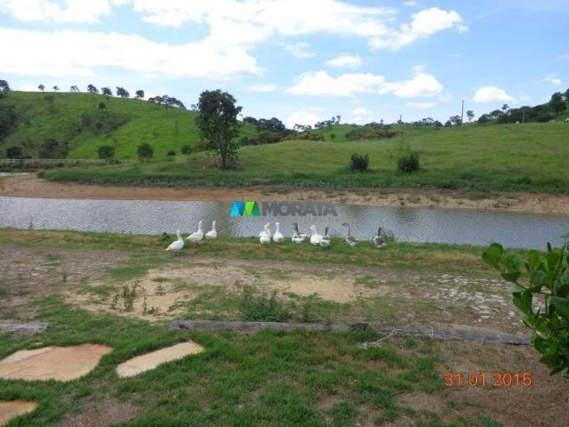 Fazenda à venda - 1.180 hectares - região jequitibá (mg) - Foto 15