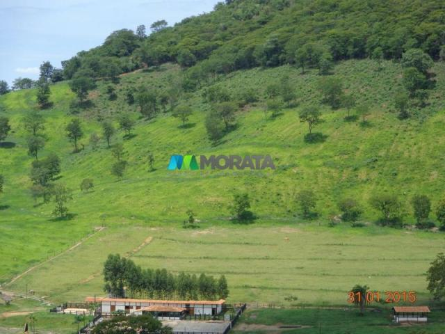 Fazenda haras – 990 hectares - sete lagoas (mg) - Foto 10