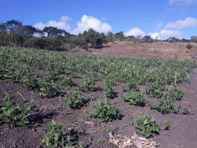 Chã de Alegria= Vend. 125 mil reais=10 Hect.=Casa,Pastos,Energia,Água e mais - Foto 4