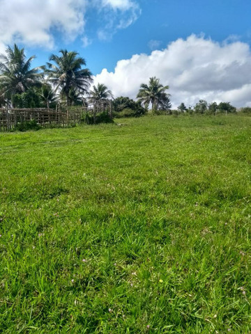 Fazenda alagoinhas arrendamento - Foto 4