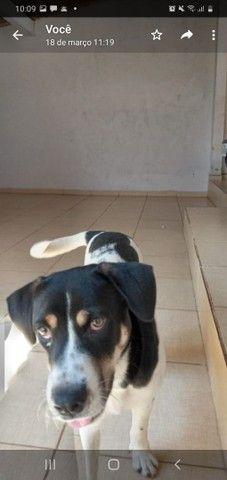 Doação de cachorro. - Foto 2