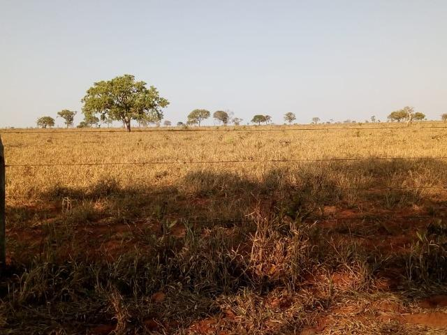Fazenda 900 hectares
