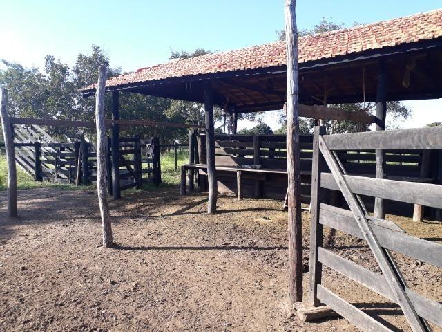 Chácara com caneiros, aves, tanque com peixes na BR 364 ha 30 km de Várzea Grande - Foto 9