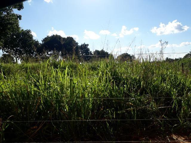 Chácara com caneiros, aves, tanque com peixes na BR 364 ha 30 km de Várzea Grande - Foto 4