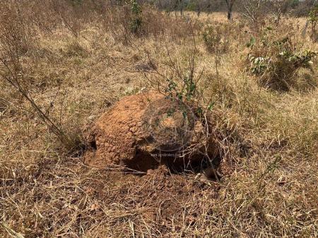 Fazenda 95 ha região chapada dos guimarães - Foto 7