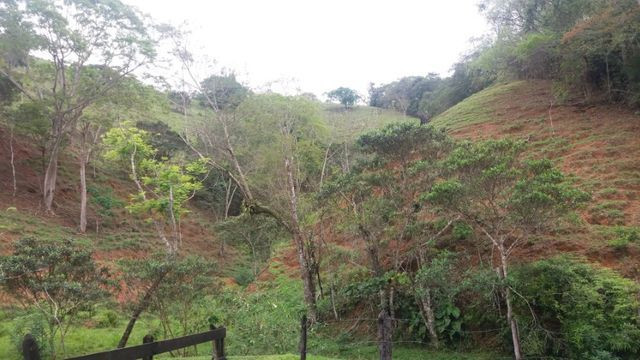 Serra de Japuíba Fazenda com 16 alqueires mineiros - Foto 9