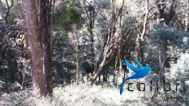 Terreno para formar chácara de lazer em Agudos do Sul - PR - Foto 9