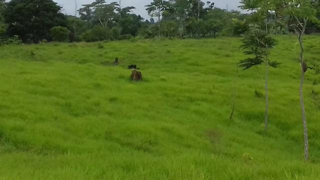 Fazenda em Porto Acre 35 km de Rio Branco