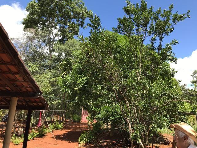 Vendo chácara em condomínio fechado lago dos cisnes, Felixlândia mg - Foto 9