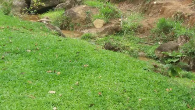 Serra de Japuíba Fazenda com 16 alqueires mineiros - Foto 7