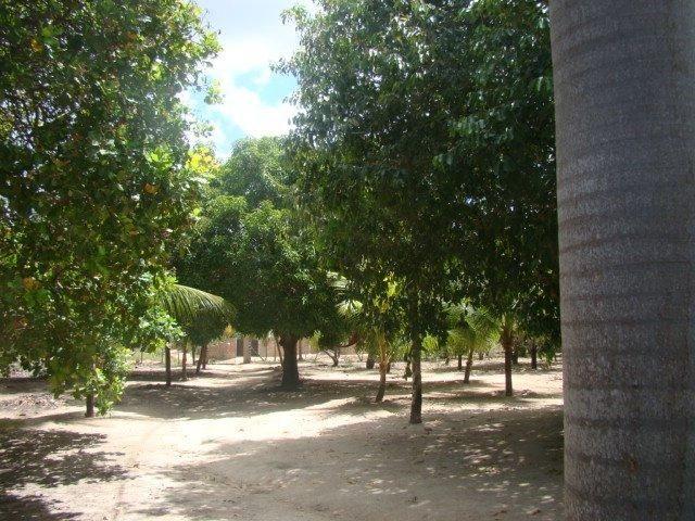 Sítio em Pacatuba, Ceará, Região Metropolitana de Fortaleza - Foto 5