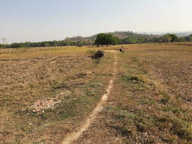 Chácara com 5 hectares na Agrovila das Palmeiras - Foto 4