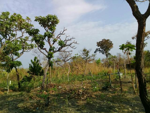 Chacara na regiao do aguacu - Foto 12