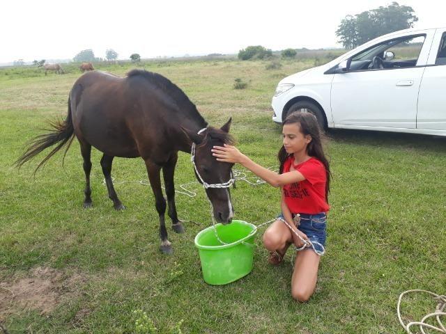 Vendo poney