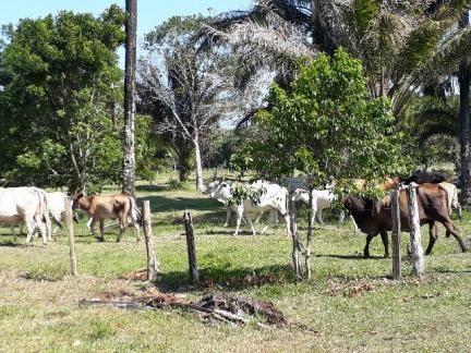 Fazenda 85 hec Vendo com Porteira Fechada - Foto 12