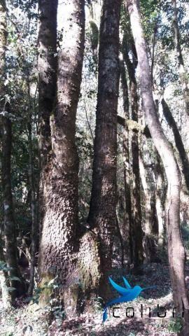 Terreno para formar chácara de lazer em Agudos do Sul - PR - Foto 10