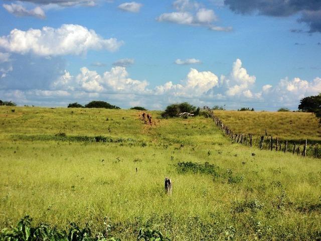 Procura terra para arrendar até 2 alqueires