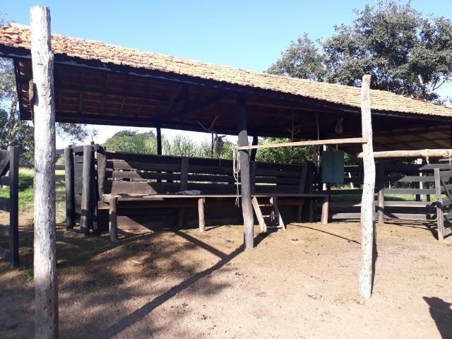 Chácara com caneiros, aves, tanque com peixes na BR 364 ha 30 km de Várzea Grande - Foto 16