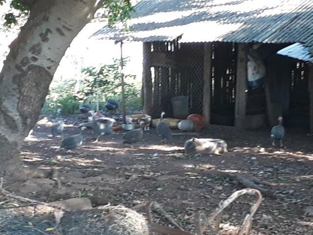 Chácara com caneiros, aves, tanque com peixes na BR 364 ha 30 km de Várzea Grande - Foto 8