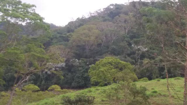Serra de Japuíba Fazenda com 16 alqueires mineiros - Foto 8