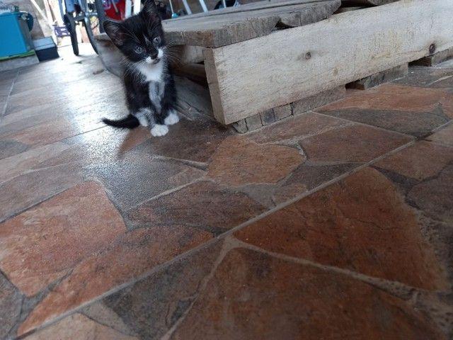 Doação de filhote de gato. - Foto 2