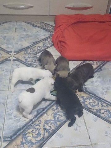 Vendo lindos filhotes de bulldog francês macho - Foto 2
