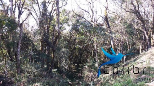 Terreno para formar chácara de lazer em Agudos do Sul - PR - Foto 13