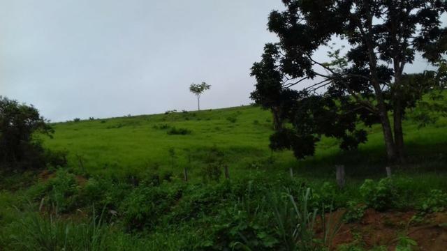 Fazenda em Porto Acre 35 km de Rio Branco - Foto 3